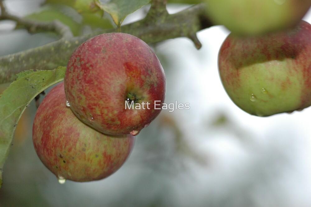 Apples in Autumn by Matt Eagles