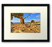 The Indomitable Juniper Framed Print