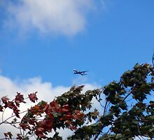 As the season flies by ('Leaf'ing below a jet plane) by Mui-Ling Teh