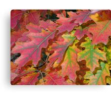Beautiful autumn leaves Canvas Print