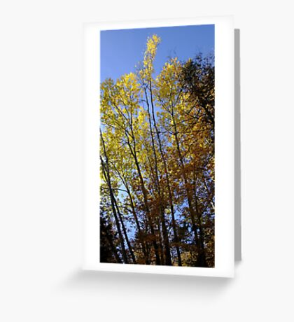 All Aflame Greeting Card