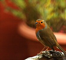 Robin on the bird bath by kimmylowe1986