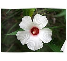 Hibiscus In The Wild Poster