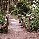 Prairie Creek Redwoods State Park by jedesigns