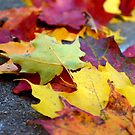 New England leaves by anchorsofhope