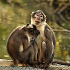 Two Monkeys by Martina Fagan