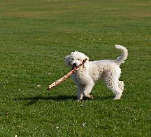 Dog Playing with Stick by Sue Robinson