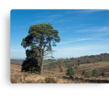 Ashdown Forest Canvas Print