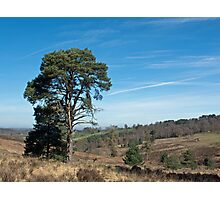 Ashdown Forest Photographic Print