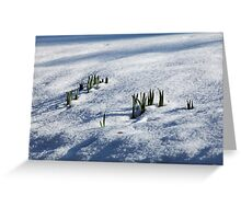 Daffodil Leaves in Snow Greeting Card