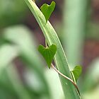 Heart Leaves by Sue Robinson