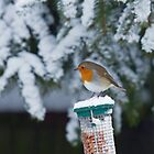 European Robin in Snow by Sue Robinson
