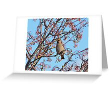 Waxwing and Rowanberries Greeting Card