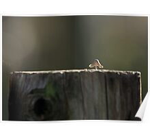 Toadstool on fence post Poster