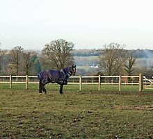 Horse in Field by Sue Robinson