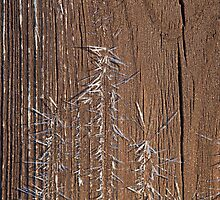 Frost on Shed Door by Sue Robinson