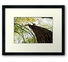 Hopeful Growth Framed Print