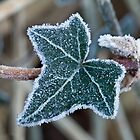Frost on Ivy Leaf by Sue Robinson