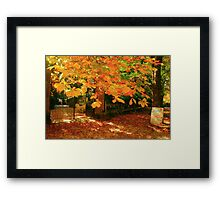 Autumnal Opening Framed Print