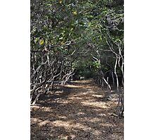 Twisted Live Oak Pathway Photographic Print