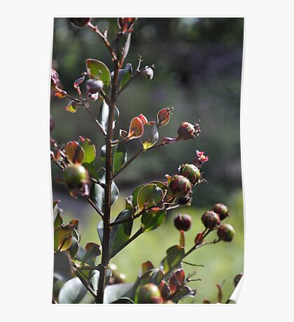 Buds on a Tree Poster