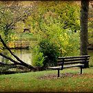 Serenity © by Dawn M. Becker