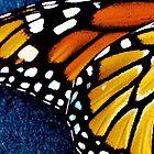 Butterfly Wing by phrozenfotos