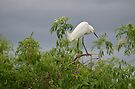 egret by Margaret  Shark
