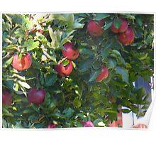 Apple pie? Toffee apples? Apple crisp?  Poster