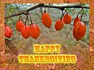 Happy Thanksgiving Greeting Card - Autumn Barberry Berries by MotherNature
