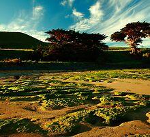 godfreys beach, stanley. northwest tasmania by tim buckley   bodhiimages