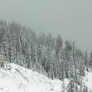 Winter's Veil by Dana DiPasquale