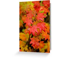 Vine Maple, Trail to Proxy Falls, Oregon Greeting Card