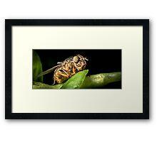 Fly On A Leaf #5 Framed Print