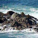 Pacific Coast Seaweed Tree by Sandra Gray