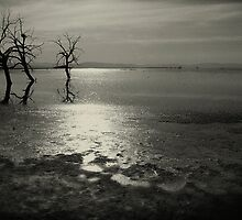 Salton Sea Trees by eddieguy