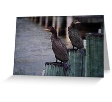 Black Cormorants Greeting Card