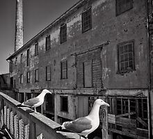 The Birds of Alcatraz by Norman Repacholi