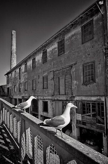 The Birds of Alcatraz by Norman Repacholi