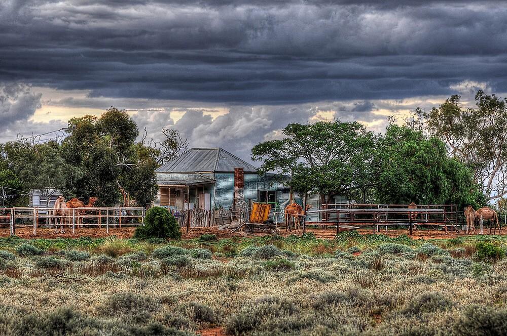 The Camel Farm  by Rod Wilkinson