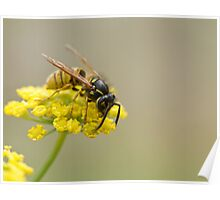 Wasp on Yellow Flower Poster