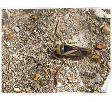 Water Boatman on path Poster