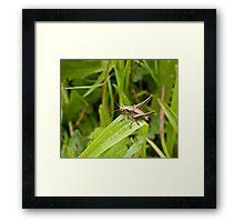 Dark Bush-cricket Framed Print