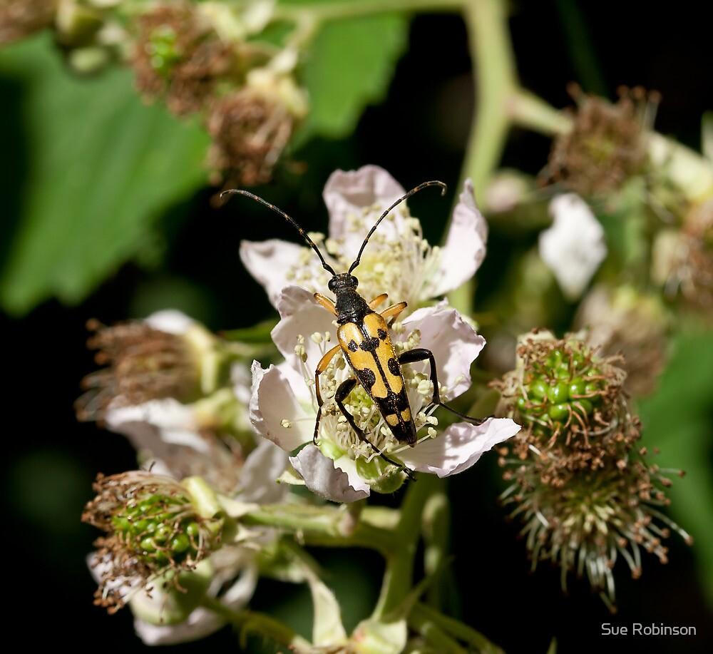 Longhorn Beetle on Bramble by Sue Robinson