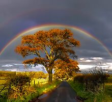 Double Rainbow by David Alexander Elder