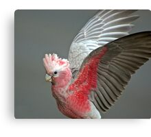 Wings. Canvas Print