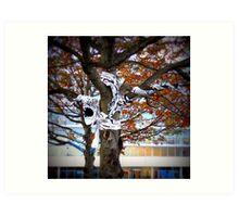 belfast tree Art Print