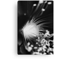 Flaunting Floozy - Black and White Version Canvas Print