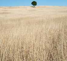 """Tree of Life"" ? Killarney, QLD - Australia by Jason Asher"