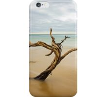 Tree, Point Nepean iPhone Case/Skin